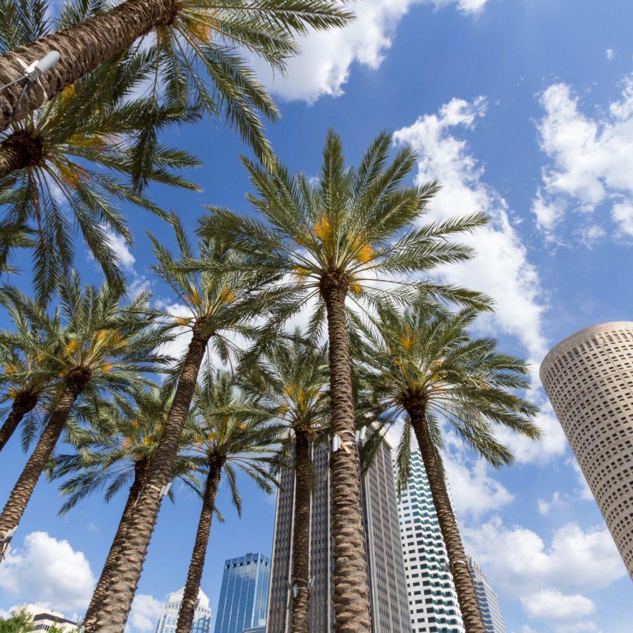 Tampa Insurance Broker